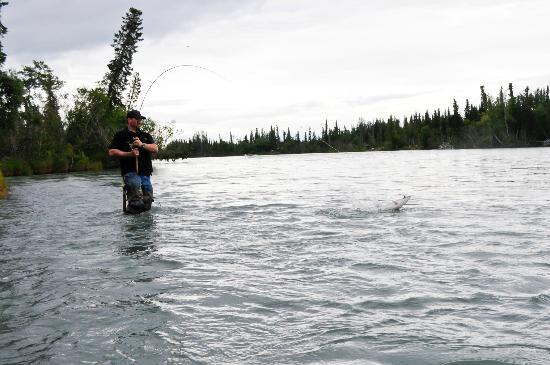 Alaska Serenity Lodge: Silver and Sockeye fishing on the Kenai, only minutes away