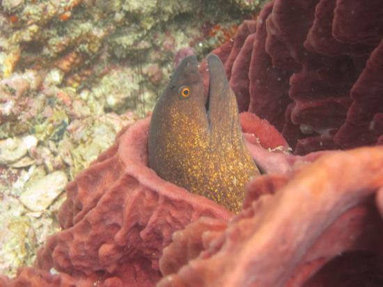 Sea Fun Divers - Day Trips: Moray eel