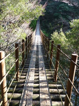 樅木の吊り橋