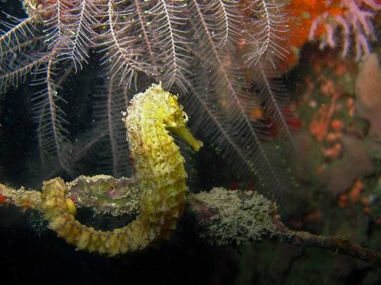 Sea Fun Divers - Day Trips: Sea Horse