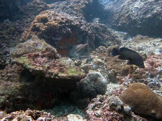 Sea Fun Divers - Day Trips 사진