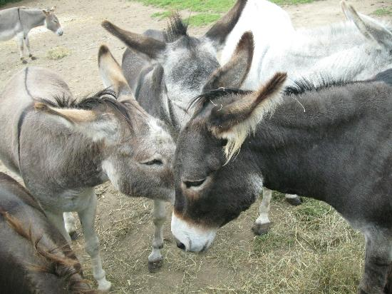 The Isle of Wight Donkey Sanctuary : Donkeys