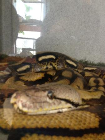 Wildlife Learning Center: Reptile room tenant