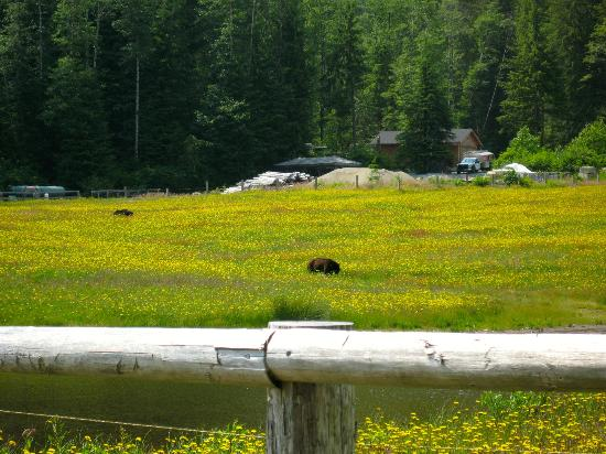 Clayoquot Wilderness Resort: A bear visited us...