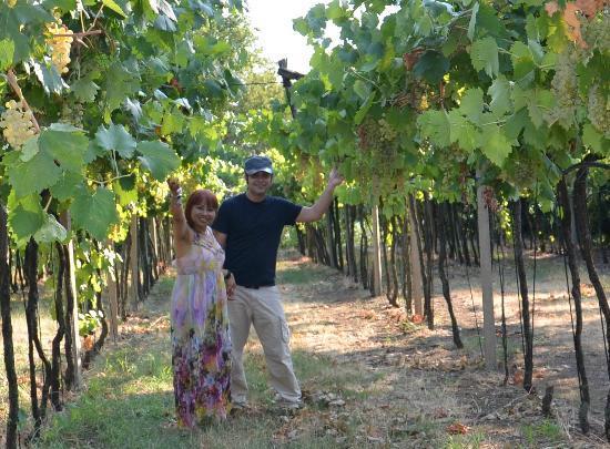 Agriturismo Libero: El viñedo