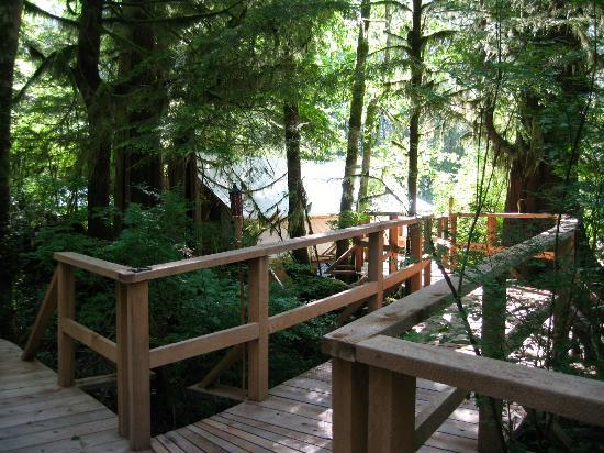Clayoquot Wilderness Resort: On the way to the Cook House (restaurant)