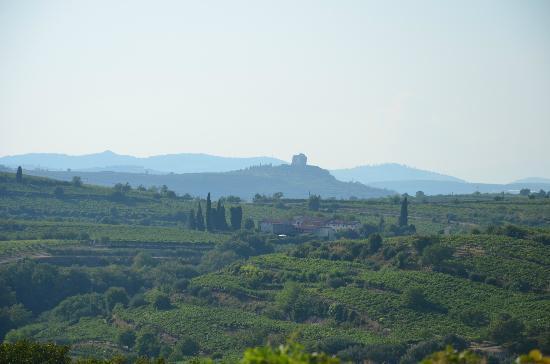 Agriturismo Libero: Vista desde el viñedo