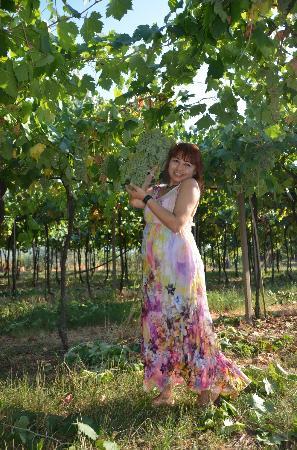 Agriturismo Libero: Viñedo del patio