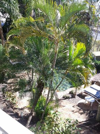 Colonial Palms Motor Inn: Pool in tropical garden