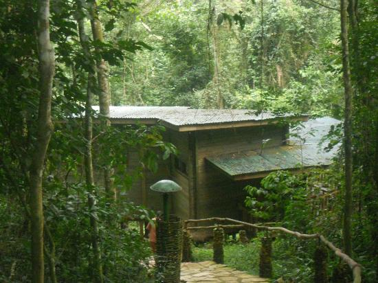 The RainForest Lodge: One of the Cabins