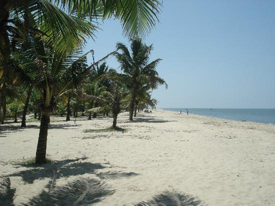 Mararikulam, India: Coconut tree lined shore