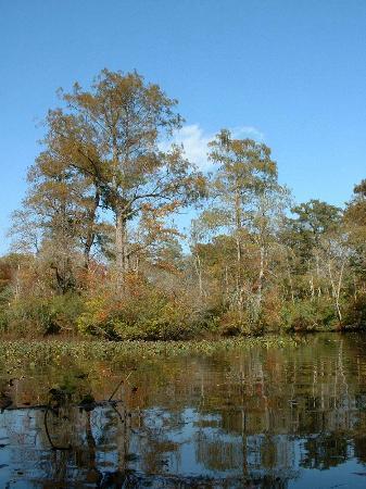 Pocomoke River Canoe Company: Nassawango Creek winds through 11,000 acres of pristine Nature Conservancy holdings.