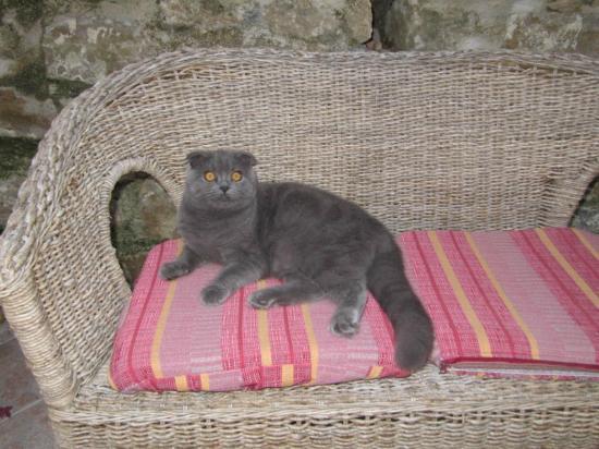 Tra Monti e Mare: Relax felino nel divanetto del cortile!