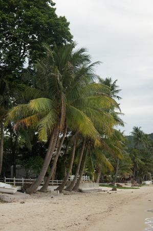 Bangrak Samui Beach Resort: Strand