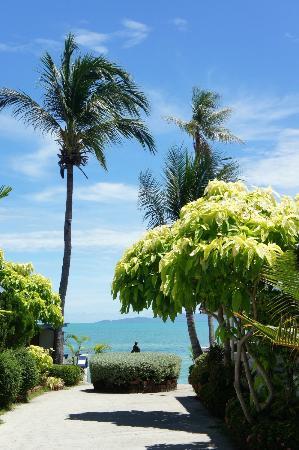 Bangrak Samui Beach Resort: Der Blick von der Hotelanlage aus