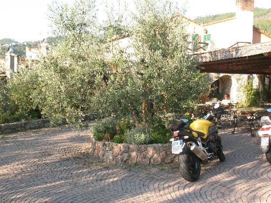 Agriturismo Beppe e Lucia: il cortile con l'ulivo