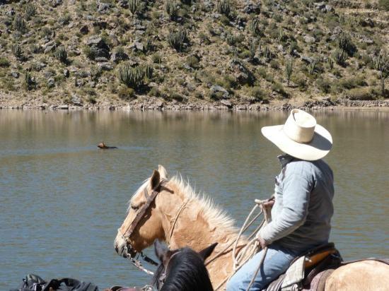 Colca Horse El Herraje: Wilbert