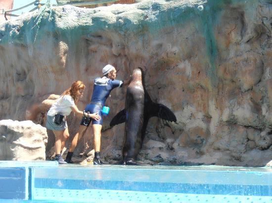 Zoomarine Algarve: sea lion show