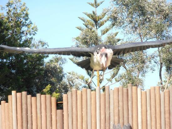 Zoomarine Algarve: birds of prey