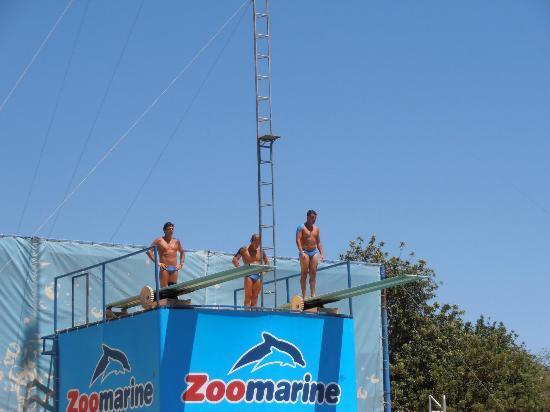 Zoomarine Algarve: divers show,brill