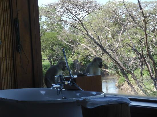 Singita Faru Faru Lodge: Local Wildlife checking things out.