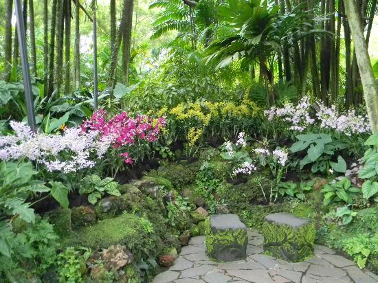 National Orchid Garden: Amazing Place