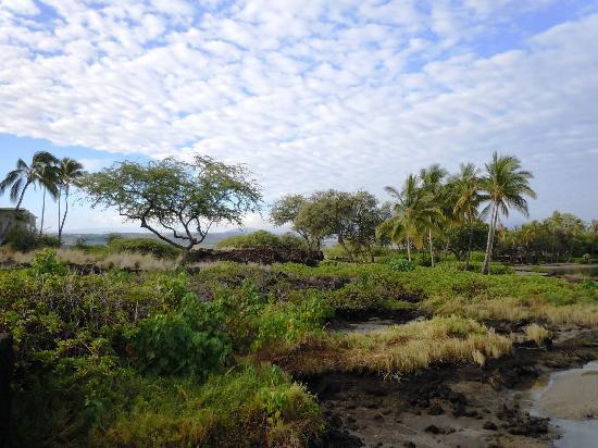 Anaehoomalu: Waikoloa