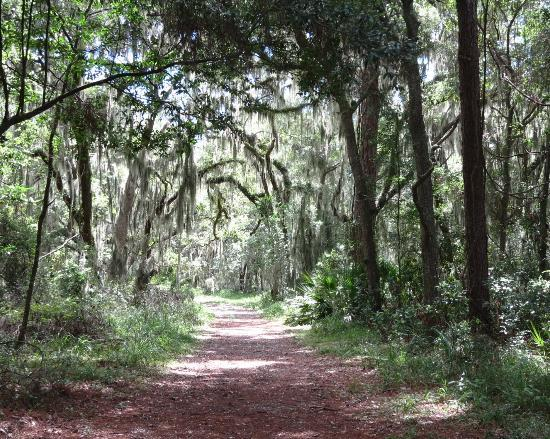 One Of Many Bike Paths Picture Of Jekyll Island Club Resort