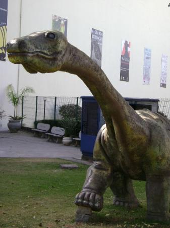 Natural Sciences Museum: Encarando um dinossauro.....