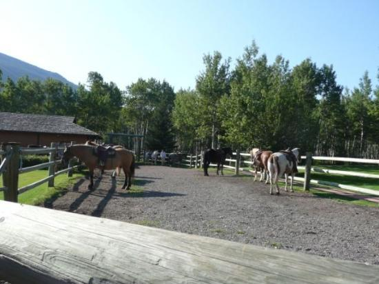 Boundary Ranch: The horses...ready and waiting