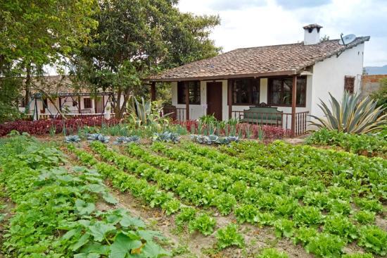 Hacienda- Hosteria Chorlavi: Huerto organico