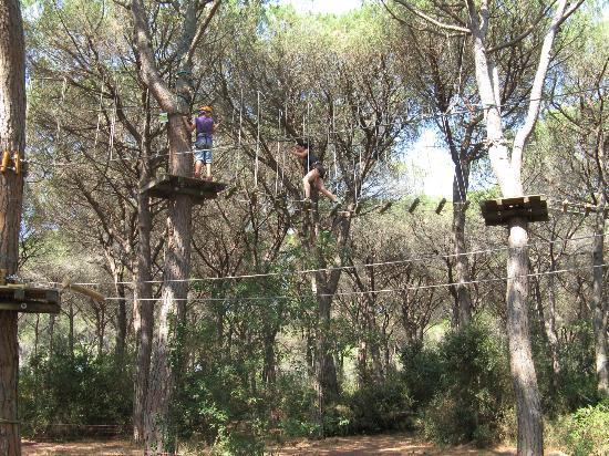 Cieloverde Camping Village: Alberovivo esperienza da non perdere