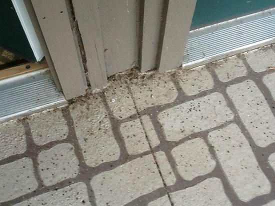 Abbey Resort & Spa: bugs on balcony outside room doorway.