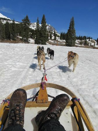 Durango Dog Ranch: Over the river and through the woods to........