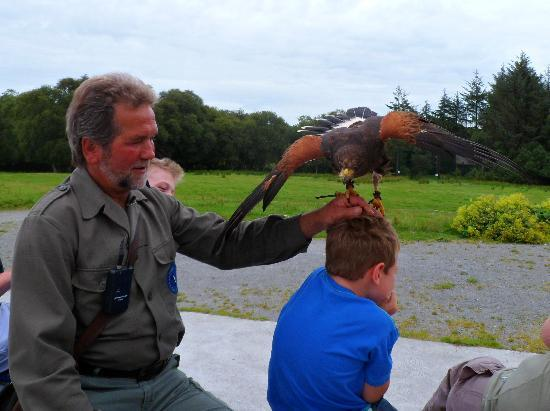 Eagles Flying: Bird of pray encouraged to fly to the hand of the proprietor just above the boy's head. He loved