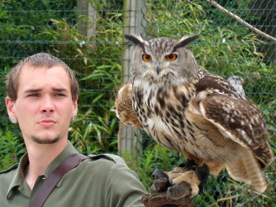 Eagles Flying: Owl