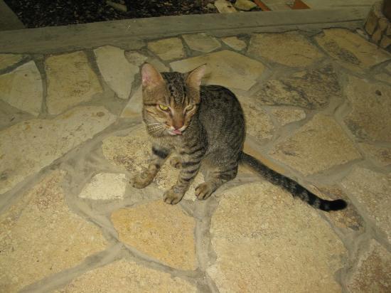 Mango Rosa Nicaragua: Mr. Stripey Cat