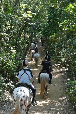 写真Billabong Horseback Adventures枚
