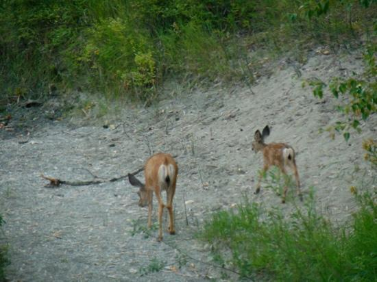 ‪‪Run of the River‬: Momma and fawn as seen from room.