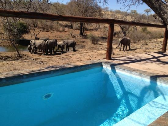 Royal Madikwe Luxury Safari Lodge: The stunning waterhole view from our (very) private plunge pool deck.