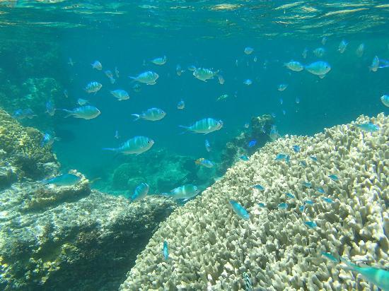 Kushibaru Beach: 珊瑚と魚