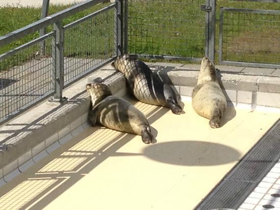 Zeehondencentrum Pieterburen: Sun bath