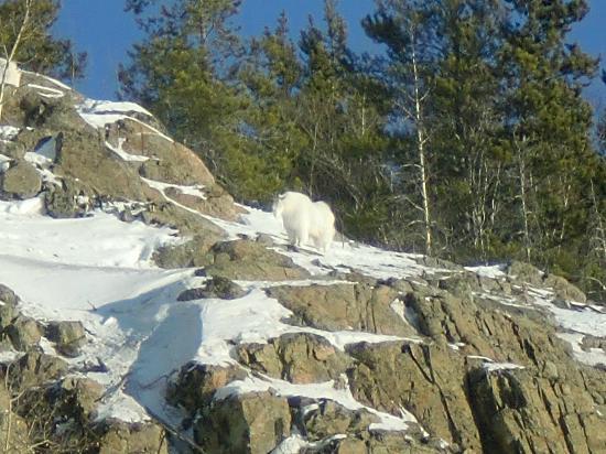 Yukon Wildlife Preserve : Find it !
