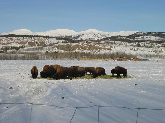 Yukon Wildlife Preserve : They made a flock.