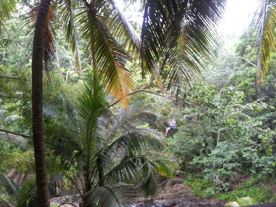 Fond Doux Plantation & Resort: Zip lining Dennery