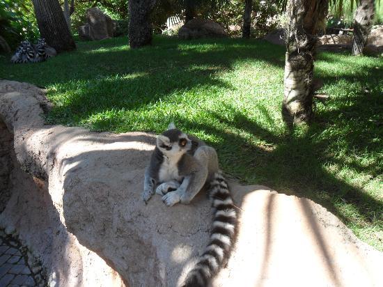 Bioparc Fuengirola: Lemur enclosure