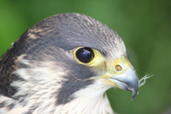 Jedforest Deer & Farm Park: Beautiful bird