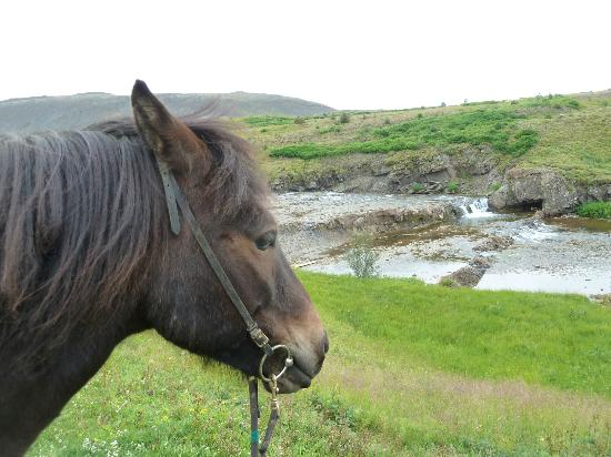 On the trail with Laxnes Horse Farm