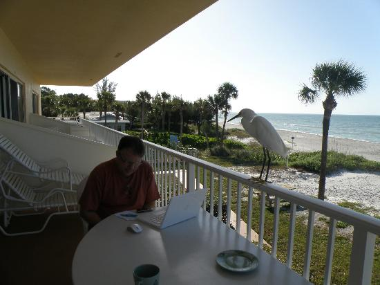 Seahorse Beach Resort At Longboat Key