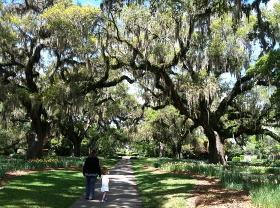 Brookgreen Gardens: Live Oak Allee